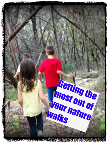 Getting the most out of your nature walks