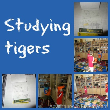 studying tigers