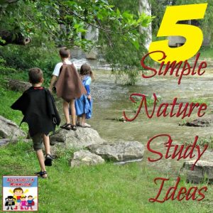 5 simple Nature Study ideas for your kids