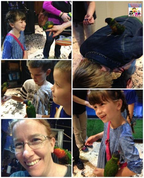 Austin Aquarium lorikeet exhibit