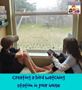 How to create a bird watching station at your house