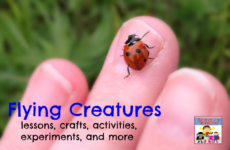 Flying creatures cover