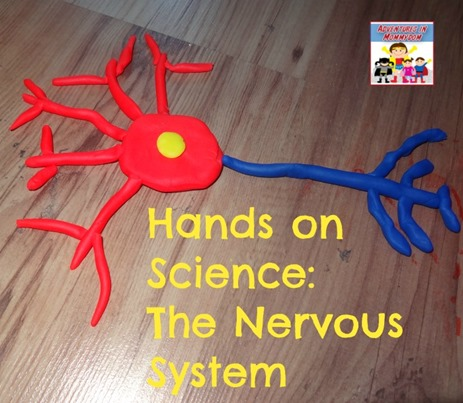 Hands on Science the nervous system