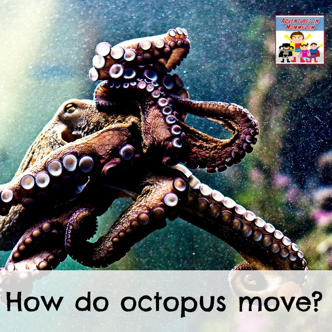 how do octopus move