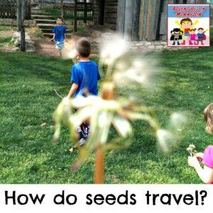 How do seeds travel preschool kindergarten