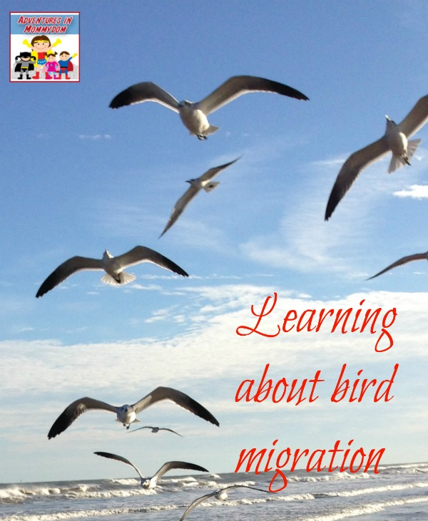 Learning about bird migration