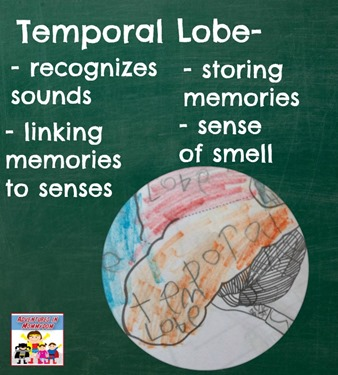 Temporal lobe responsibilities, for rest of the brain check out the blog post