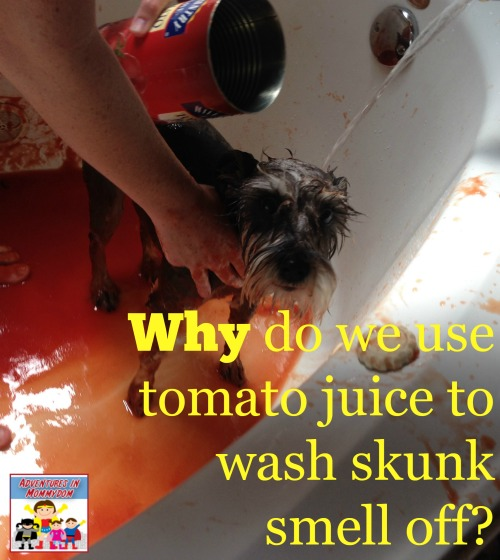 Why do we use tomato juice to wash skunk smell off