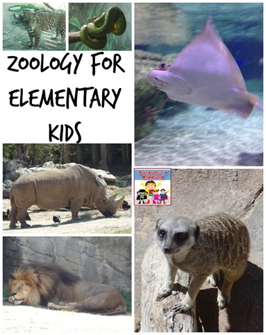 Zoology for elementary kids