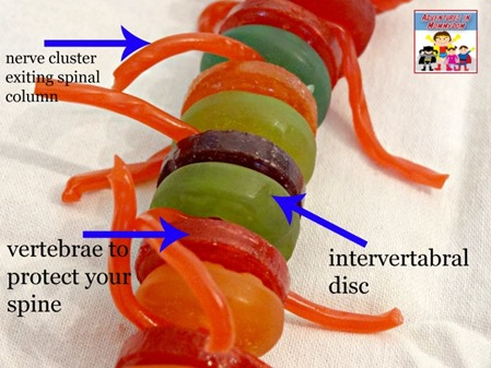 candy spinal column