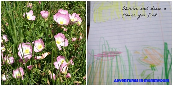 easy nature study observe and draw a flower