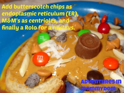 Science Sunday: edible cell model for elementary kids