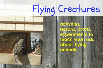 flying creatures