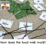 food web lesson