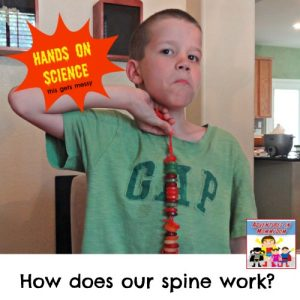 how does our spine work