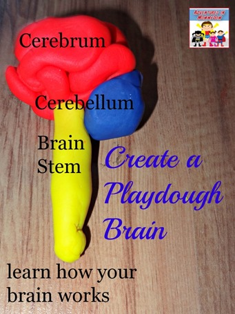 how to make a playdough brain