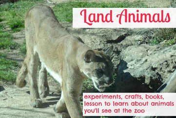 land animals