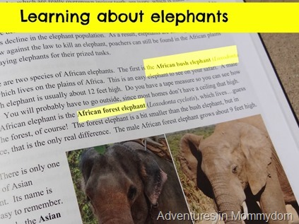 learning about elephants