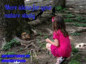 Science Sunday: More easy nature study ideas