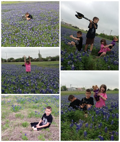 more bluebonnet pictures