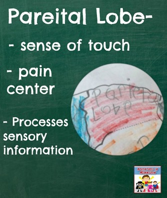 pareital lobe explained, for rest of the brain check out the blog post