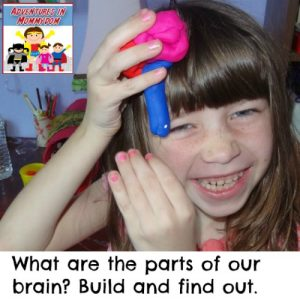 play dough brain model for elementary