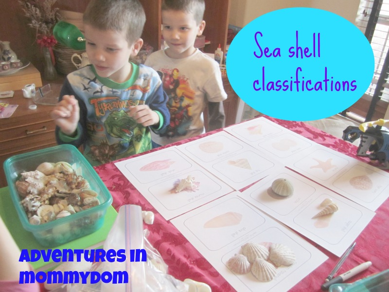 sea shell classifications