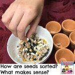 seed sorting lesson for kids preschool kindergarten