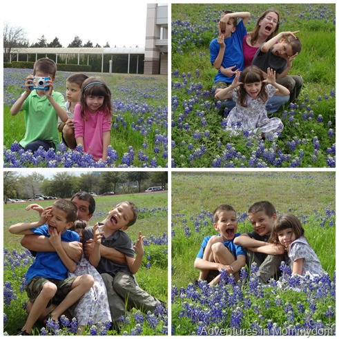 silly family bluebonnets