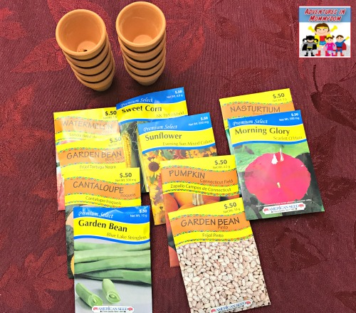 supplies for seed sorting activity