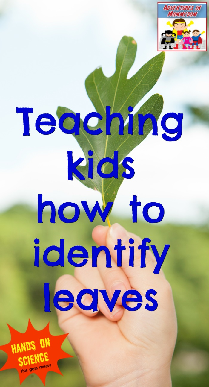 teaching kids how to identify leaves