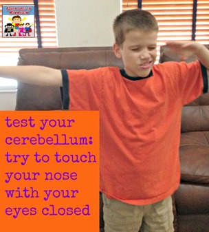 test your cerebellum