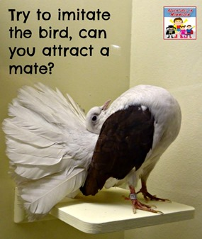 try to imitate the bird, can you attract a mate