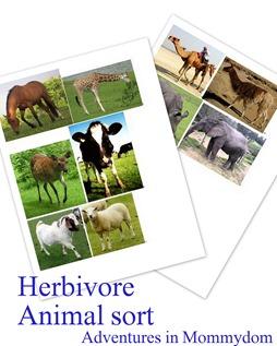 herbivore animal sort