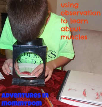using observation to learn about muscles