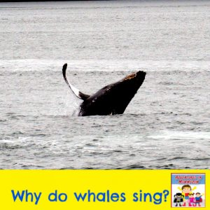 why do whales sing